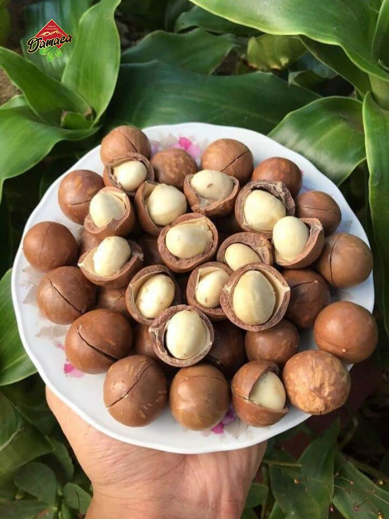Recipes using macadamia nuts, how to process and preserve macca nuts