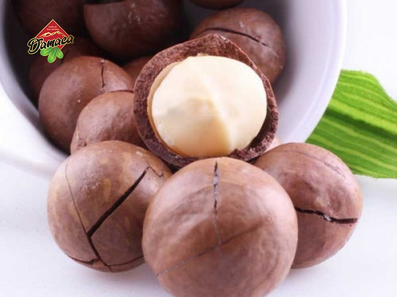The use of macadamia nuts to the health of users - Damaca.vn