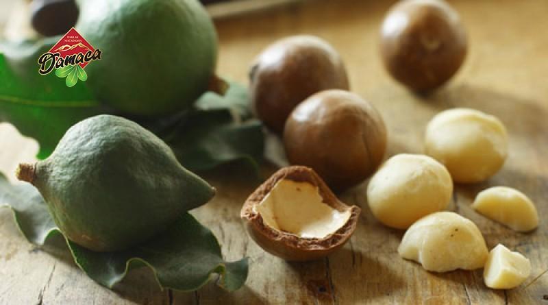 macadamia là hạt gì ? tác dụng của mắc ca ra sao? - Damaca.vn